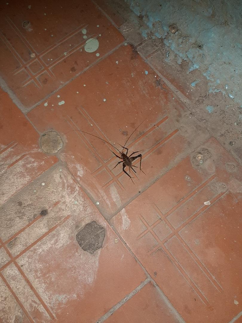 «Страх божий»: гигантское насекомое в подъезде напугало ярославцев