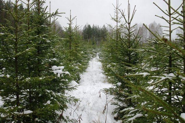 В лесах Ярославской области начнет рейды новогодний патруль
