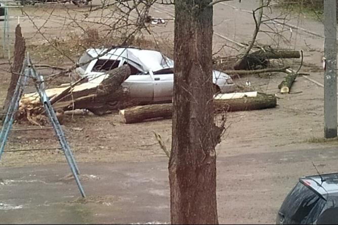 В Ярославле упавшее дерево расплющило легковушку