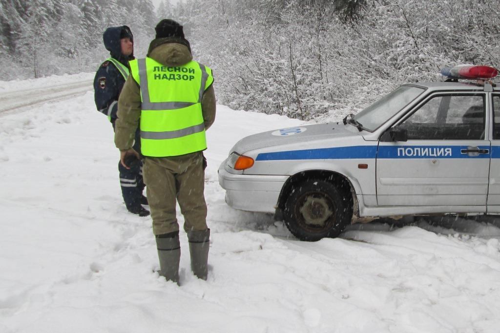 В Ярославской области не допустили незаконной вырубки елей в период новогодних праздников