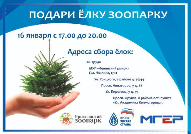 В Ярославле акция «Подари елку зоопарку» пройдет во всех районах города: адреса