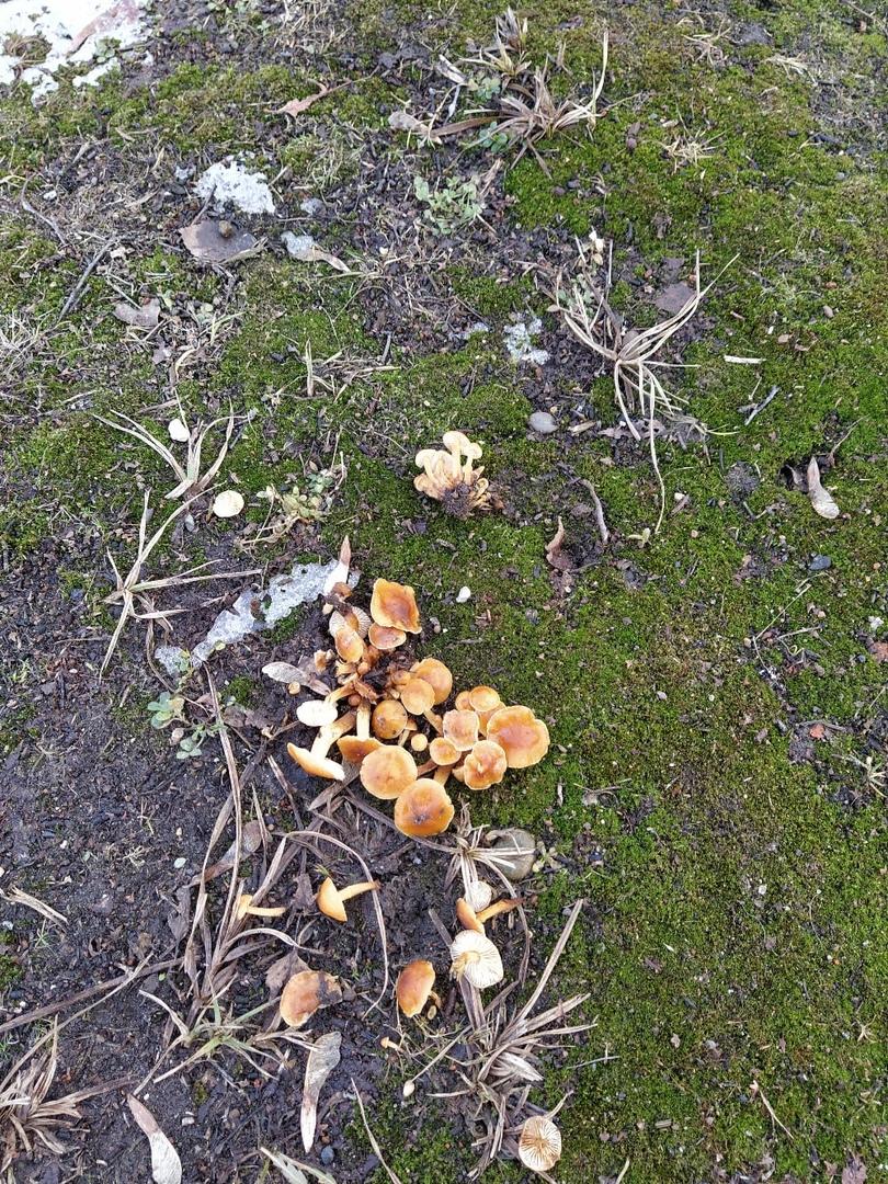 В Ярославле в канун Крещения пошли грибы и распустились цветы