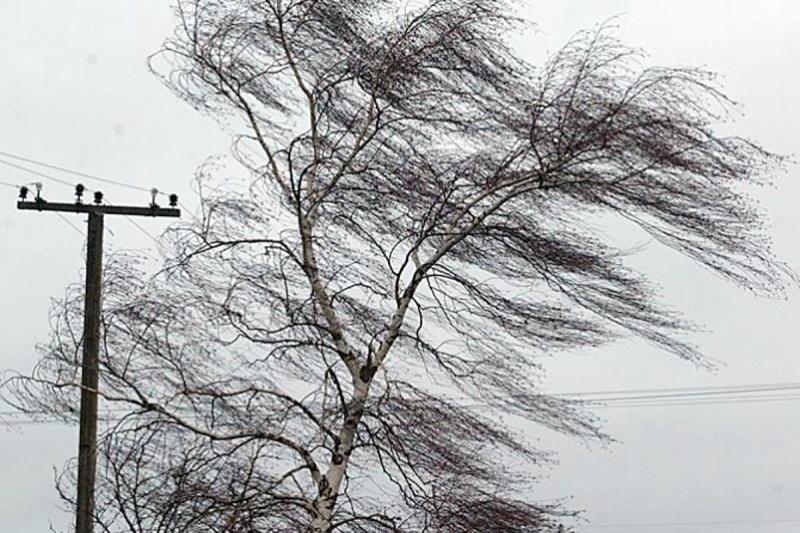 МЧС по Ярославской области опубликовало экстренное предупреждение из-за усиления ветра