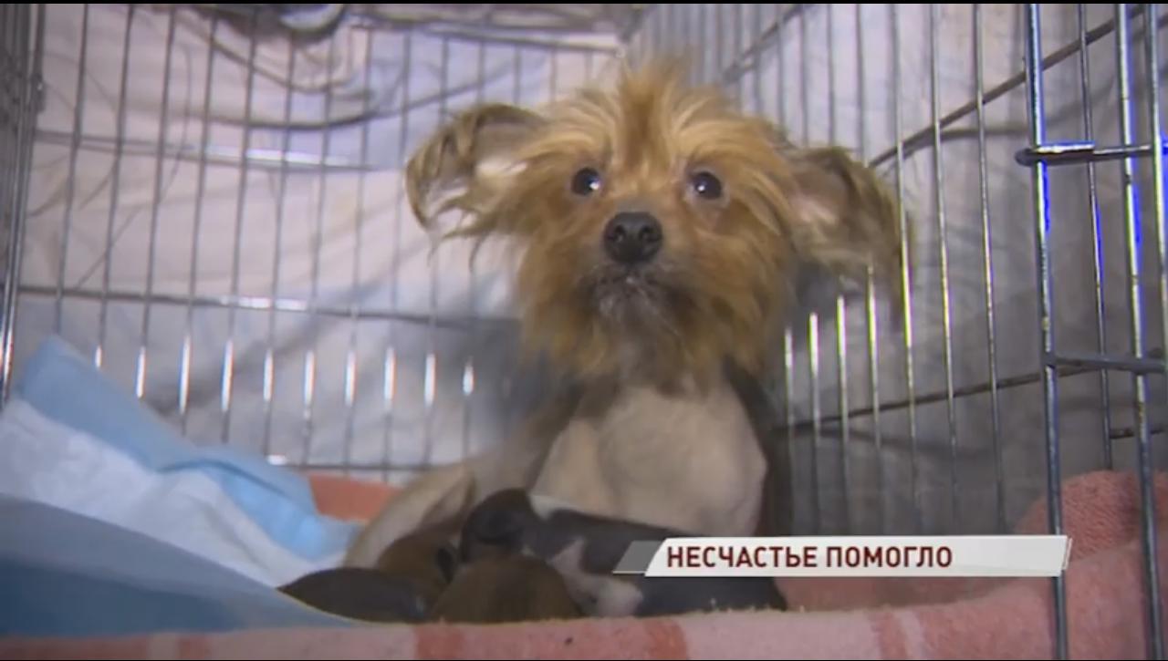 Запертые собаки от голода съели сородича: в Ярославле пожар в квартире помог спастись животным