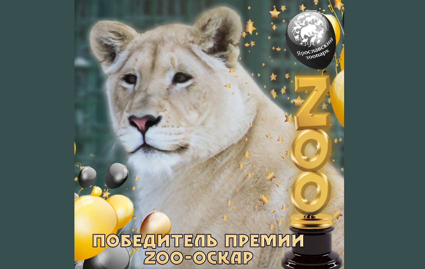 В Ярославском зоопарке назвали обладателя «ZOO-Оскара»
