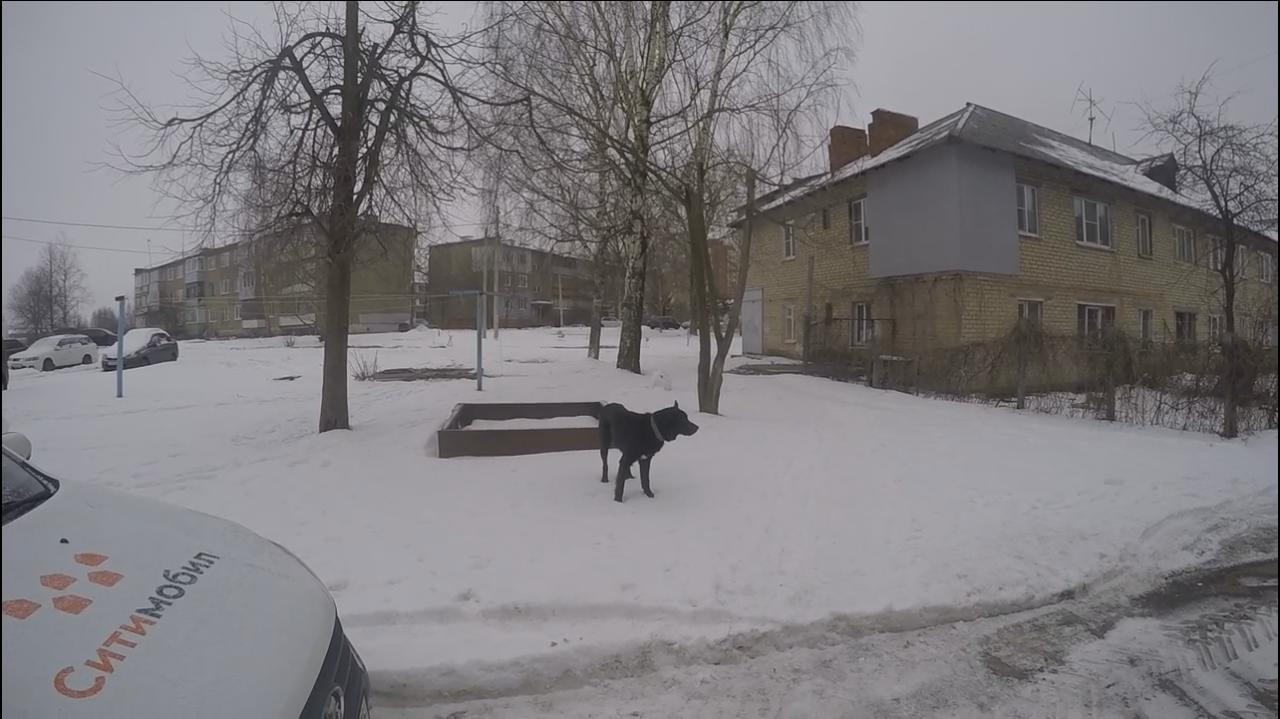 В Ярославле спасатели помогли псу выбраться из подвала: видео