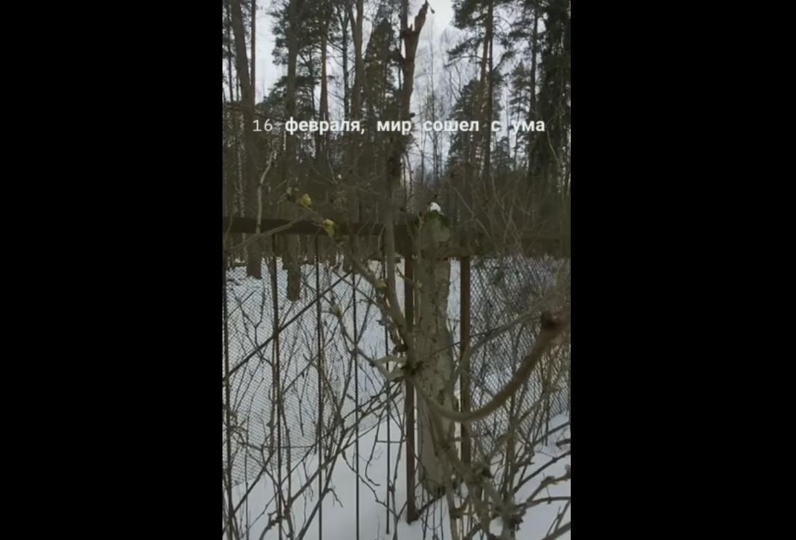 12 дней до весны: в Рыбинске на кустах набухли почки