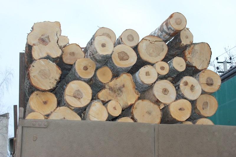 Штраф за нарушения при транспортировке древесины в Ярославской области – до 700 тысяч рублей