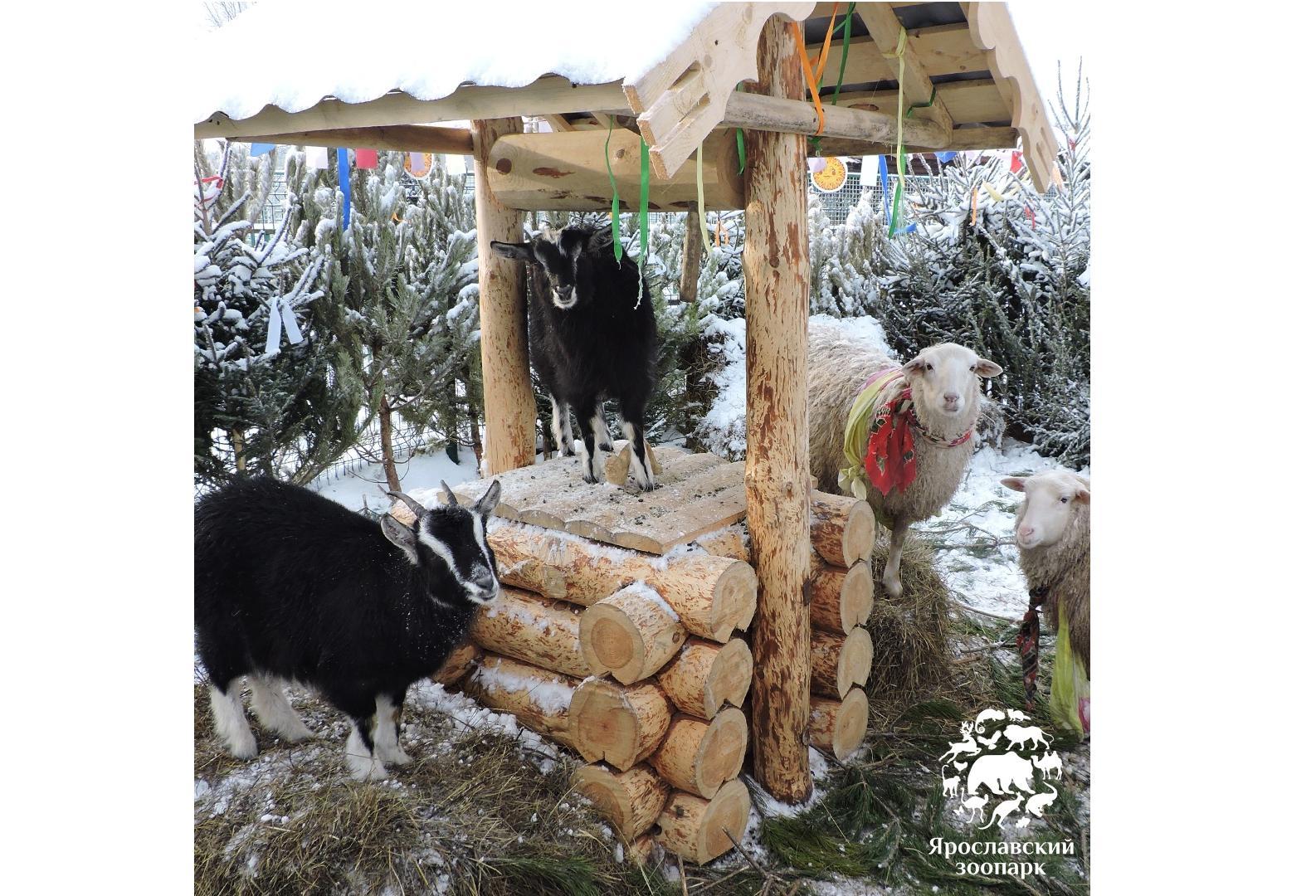 В Ярославском зоопарке на «ZOO-Масленице» устроили показательные кормления