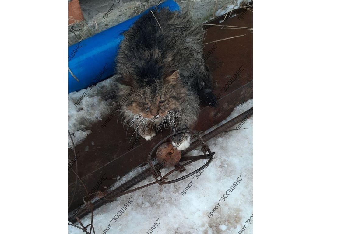 В Ярославской области живодер расставил капканы на бездомных животных