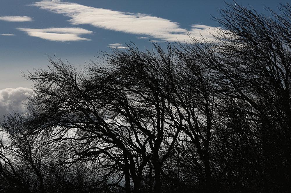 МЧС опубликовало экстренное предупреждение об усилении ветра в Ярославской области