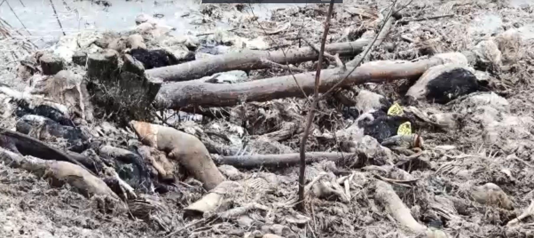 В Ярославской области убрали несанкционированный скотомогильник