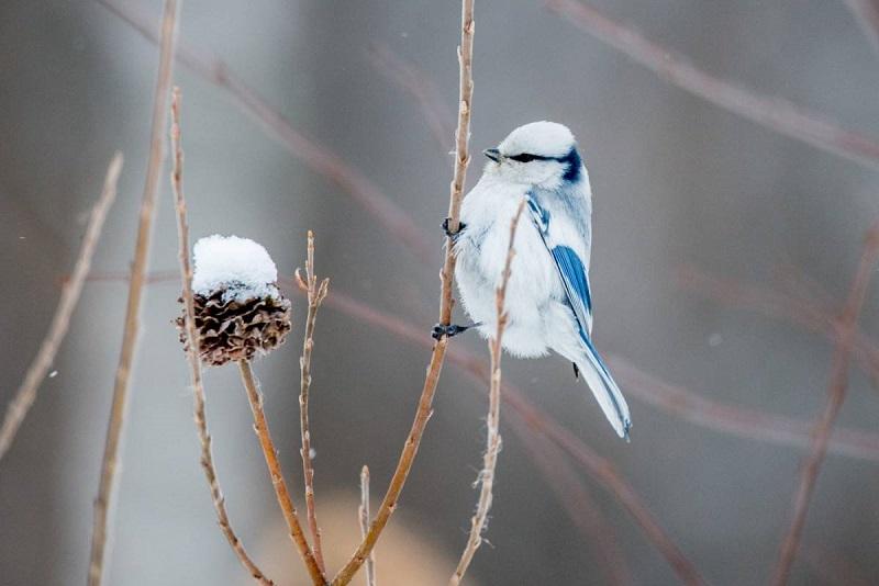 Каждый третий вид птиц в Ярославской области занесен в Красную книгу
