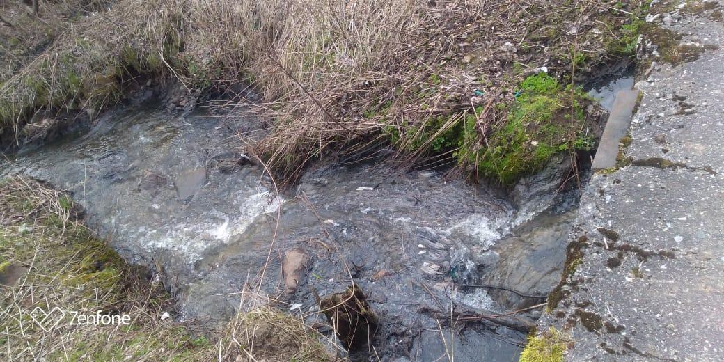 Информация о загрязнении Фоминского ручья в Рыбинском районе не подтвердилась
