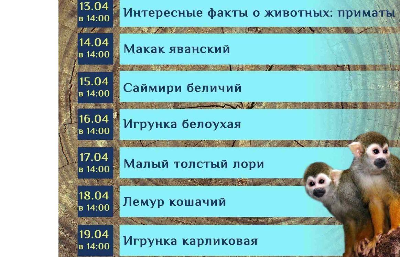 В Ярославском зоопарке стартует неделя онлайн-экскурсий с приматами