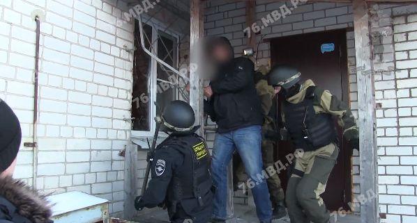 В Ярославской области у ОПГ изъяли 450 кустов конопли: видео задержания
