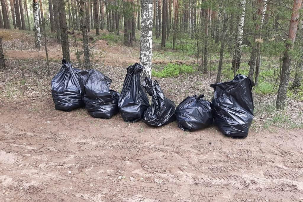 В Ярославской области 70 кубометров отходов вывезено из лесов в рамках акции «Очистим лес от мусора»