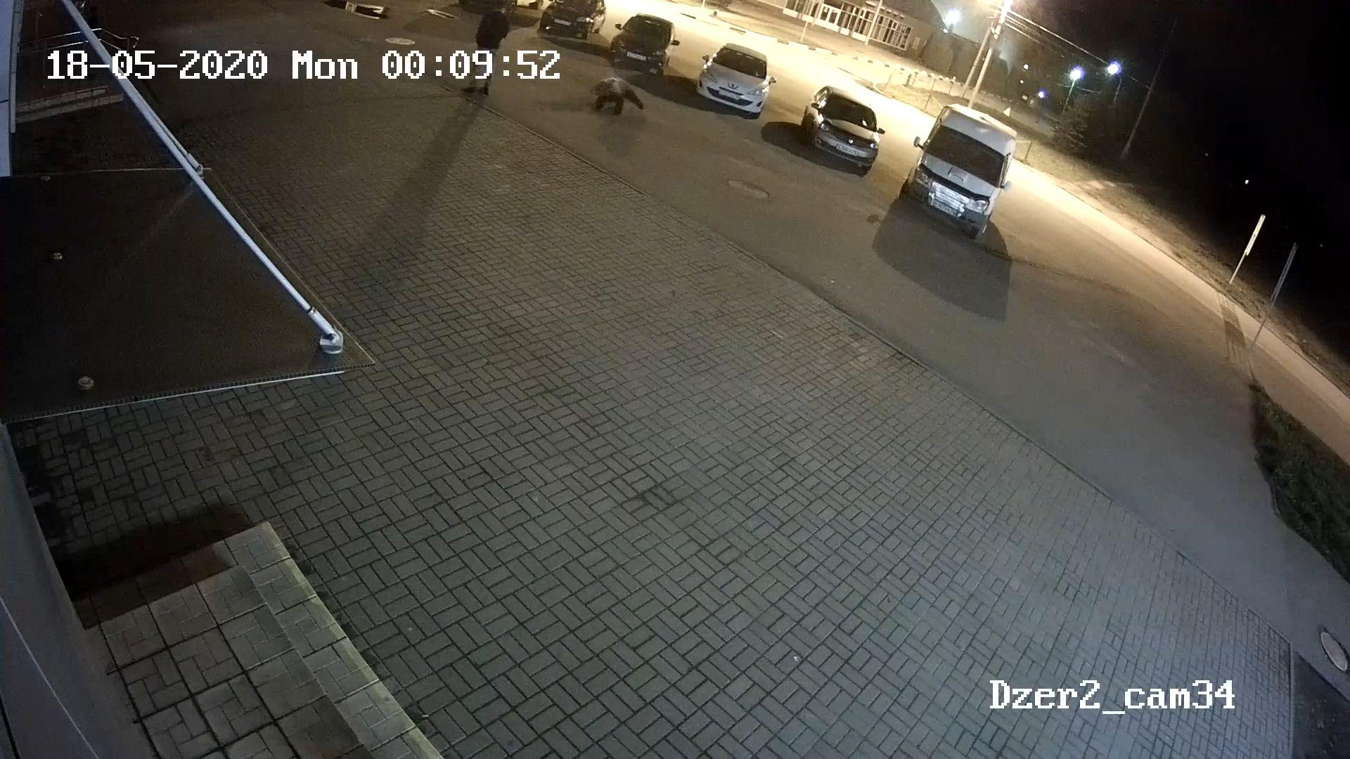 Появилось видео нападения медведя на человека в Ярославле