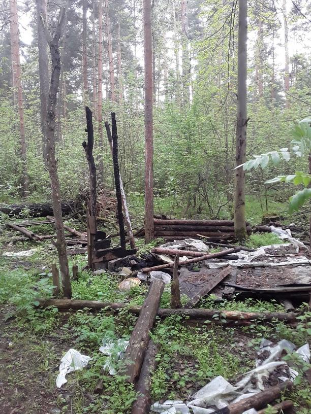 В Ярославле прокуратура обяжет «Горзеленхозстрой» очистить Тверицкий парк от мусора и поваленных деревьев