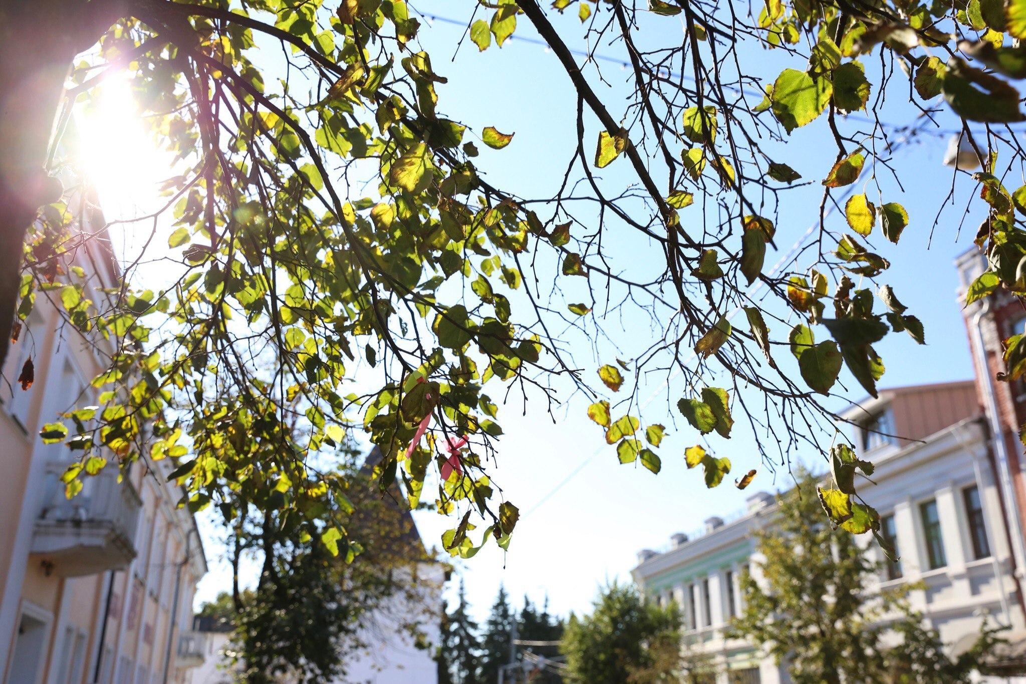 В Ярославскую область на следующей неделе вернется тепло