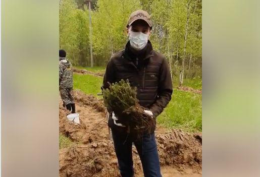 Волонтеры в Ярославской области высаживают деревья в память о героях