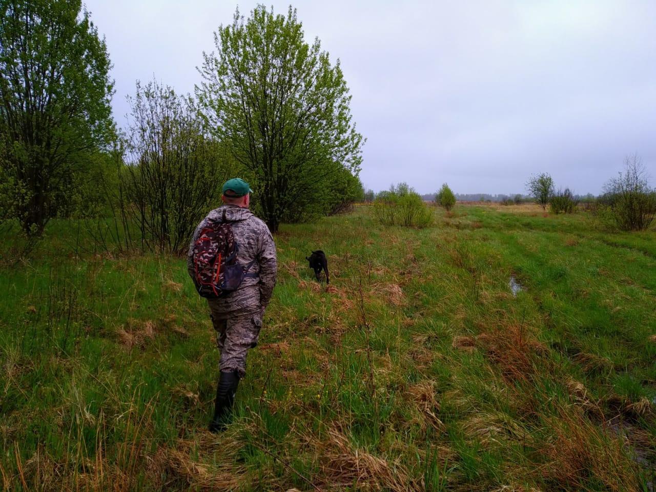Для предупреждения захода диких животных в город началось патрулирование прилегающих к Ярославлю лесов