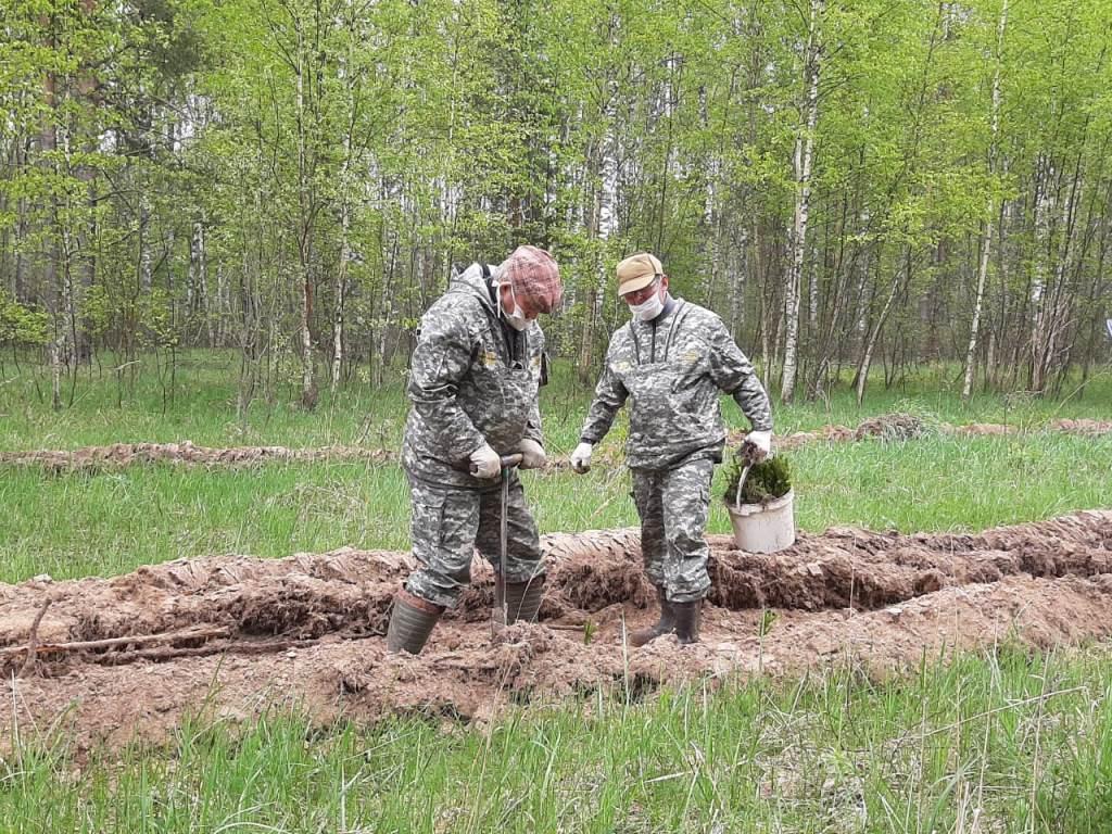 Жители Ярославской области могут принять участие в онлайн-акции «Я охраняю природу»