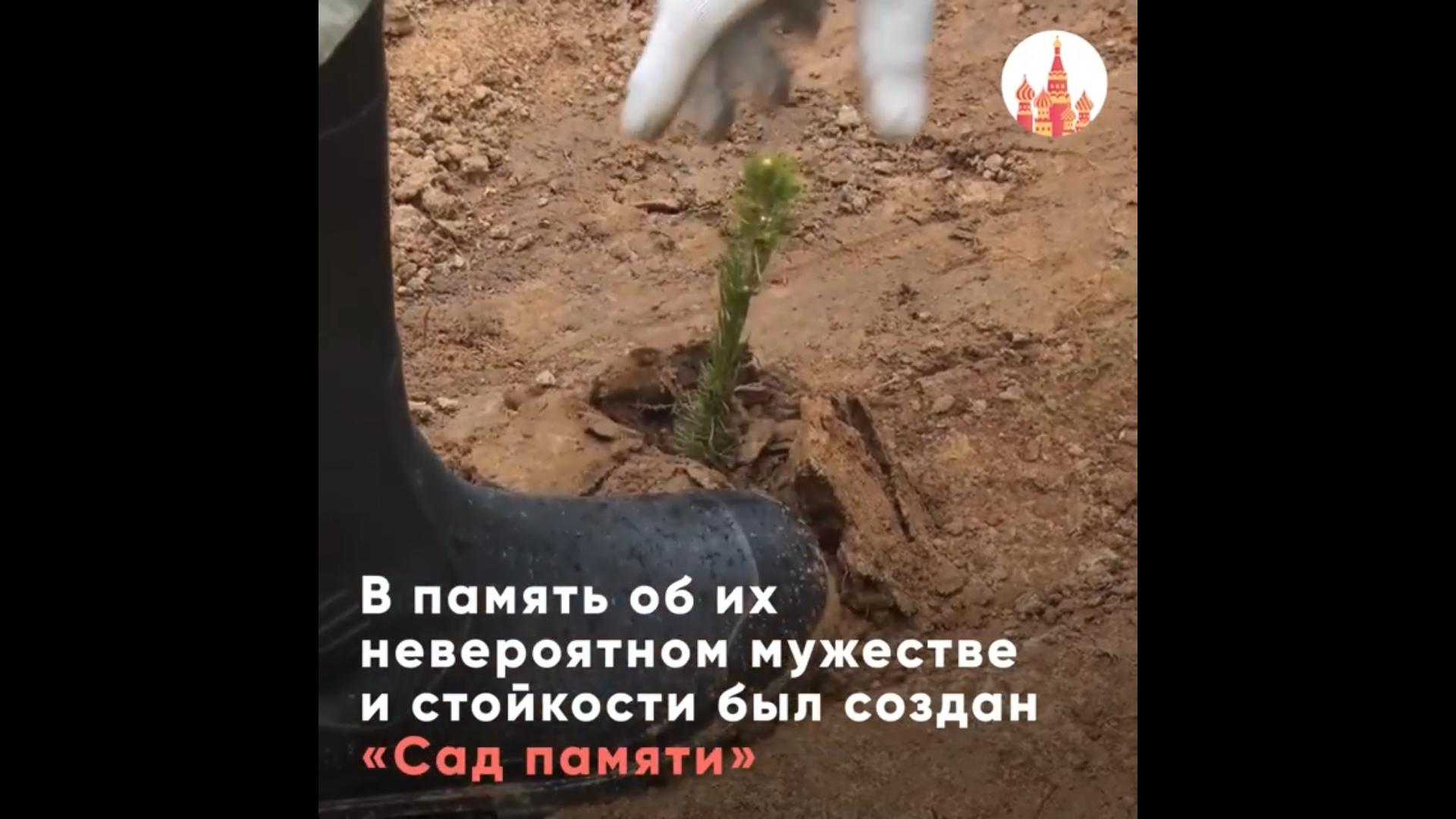 Роман Колесов: ярославцы могут принять участие в акции «Сад памяти» в режиме онлайн