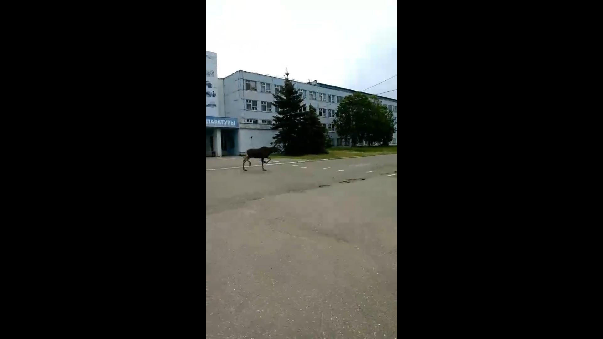 «Ракетного топлива глотнул и побежал»: в Ярославле у завода заметили еще одного лося