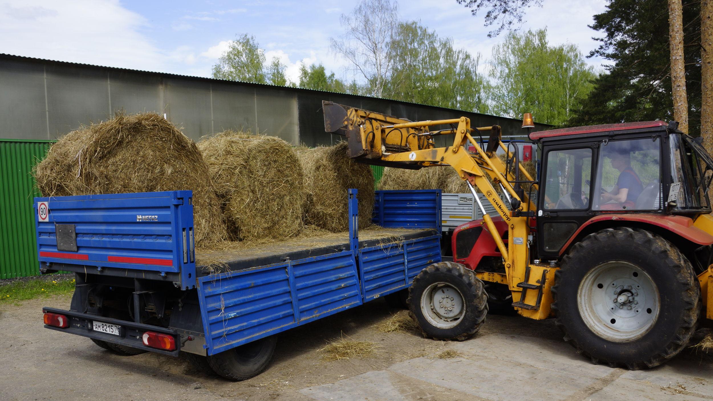В Ярославле спасают лошадей, страдающих из-за коронавирусных ограничений