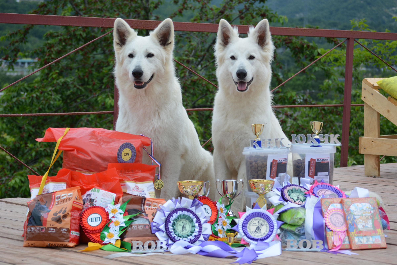 Кинологи УФСИН по Ярославской области рассказали, как готовят собак-чемпионов