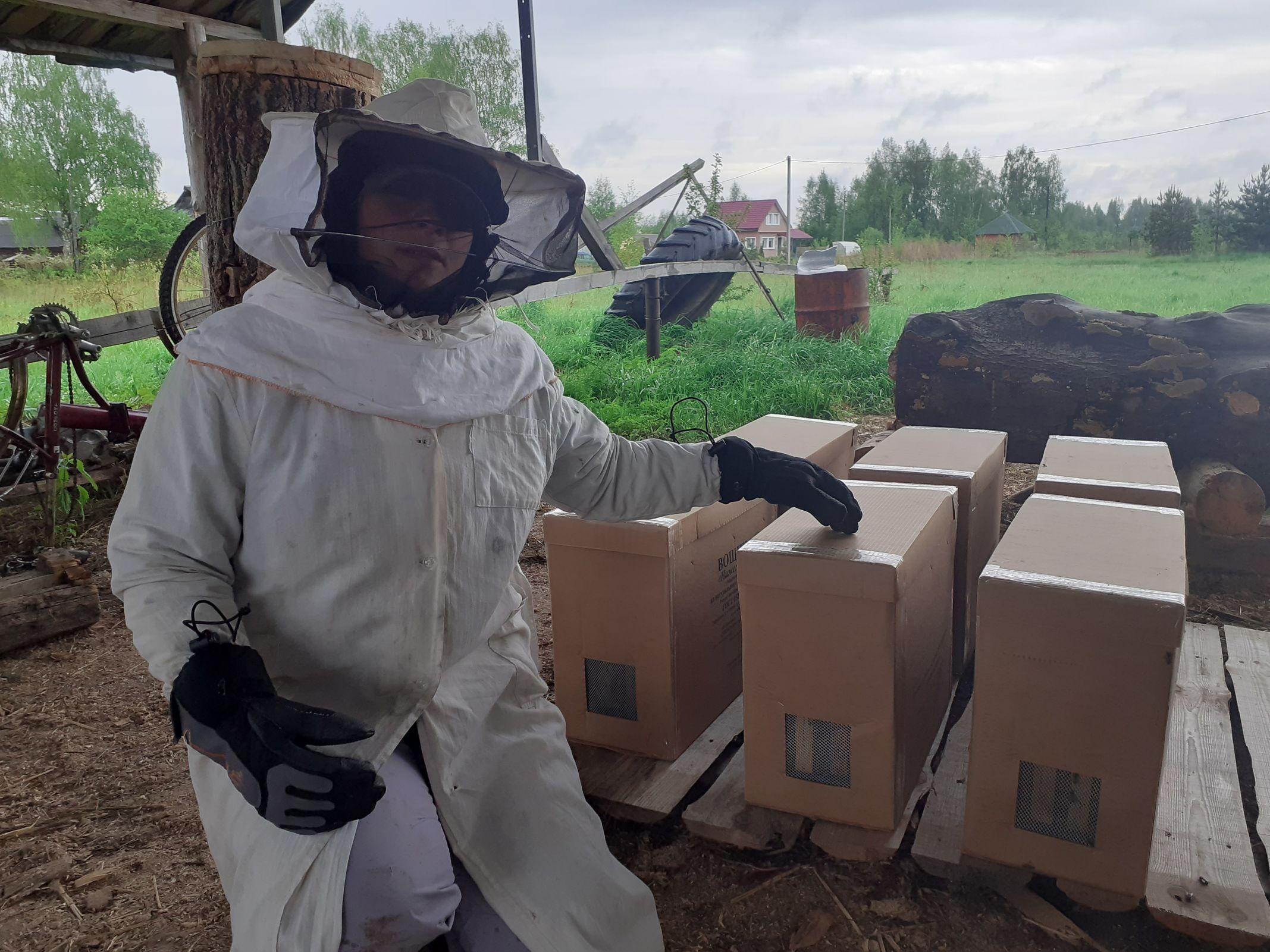 В Ярославской области осваивают необычный способ разведения пчел