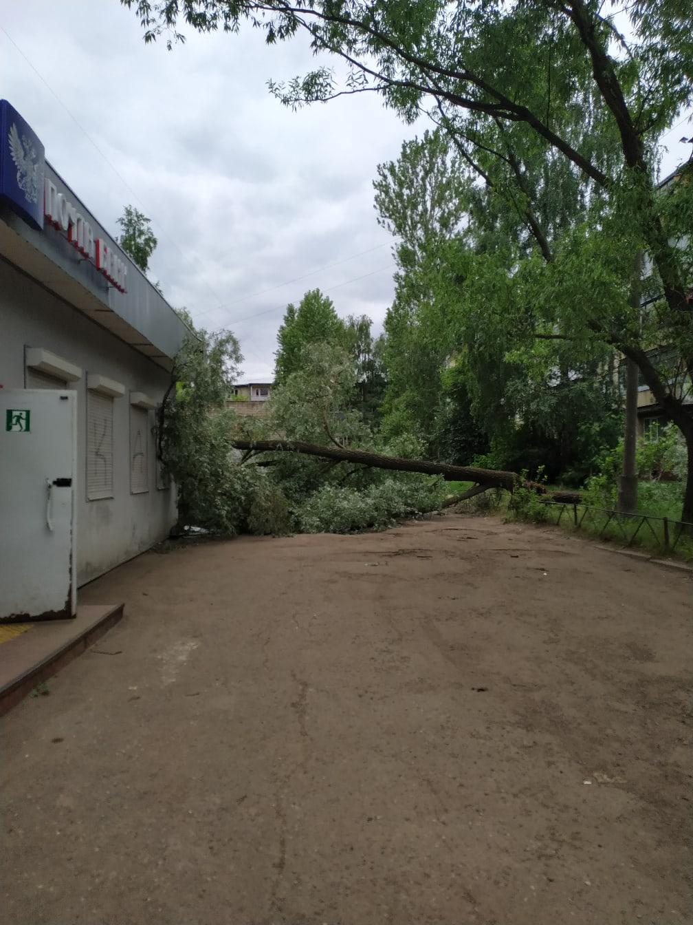 На здание почты в Ярославле рухнула ива