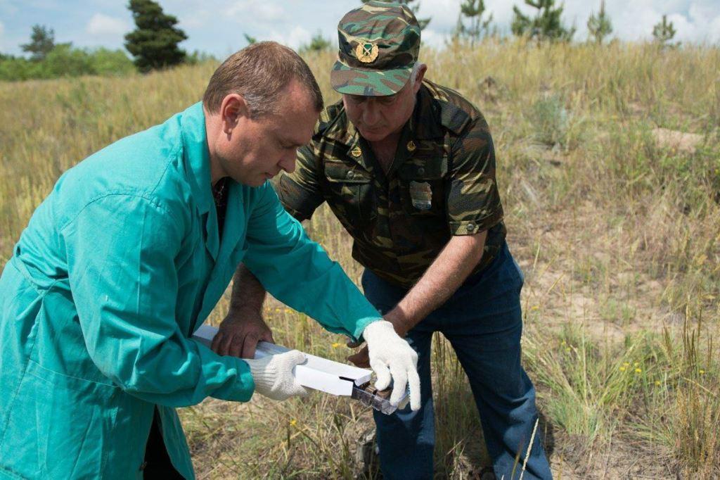 В лесах Ярославской области разложили сотни тысяч доз вакцины от бешенства
