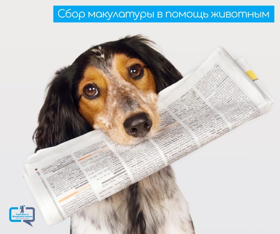 Ярославцы могут сдать макулатуру, чтобы помочь бездомным животным