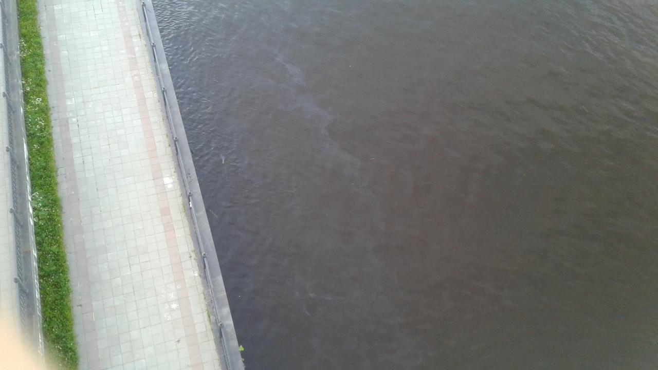 Ущерб от сбросов нефтепродуктов в Волгу в Ярославле оценили в 300 тысяч рублей