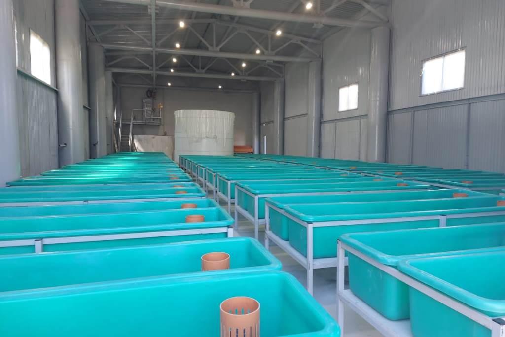 Производство товарной рыбы за прошлый год в Ярославской области выросло на 50%