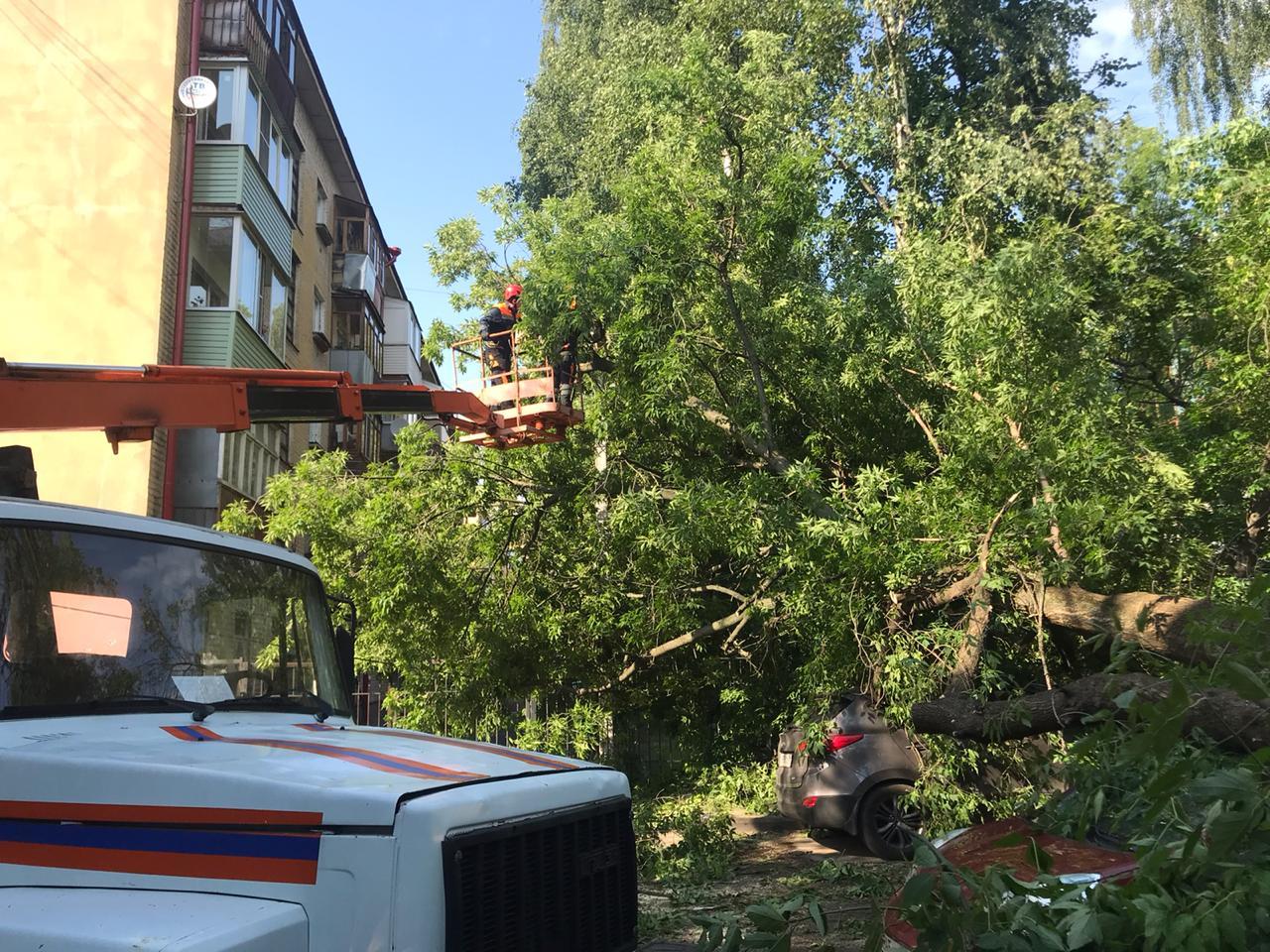 Огромное дерево упало на две машины в центре Ярославля