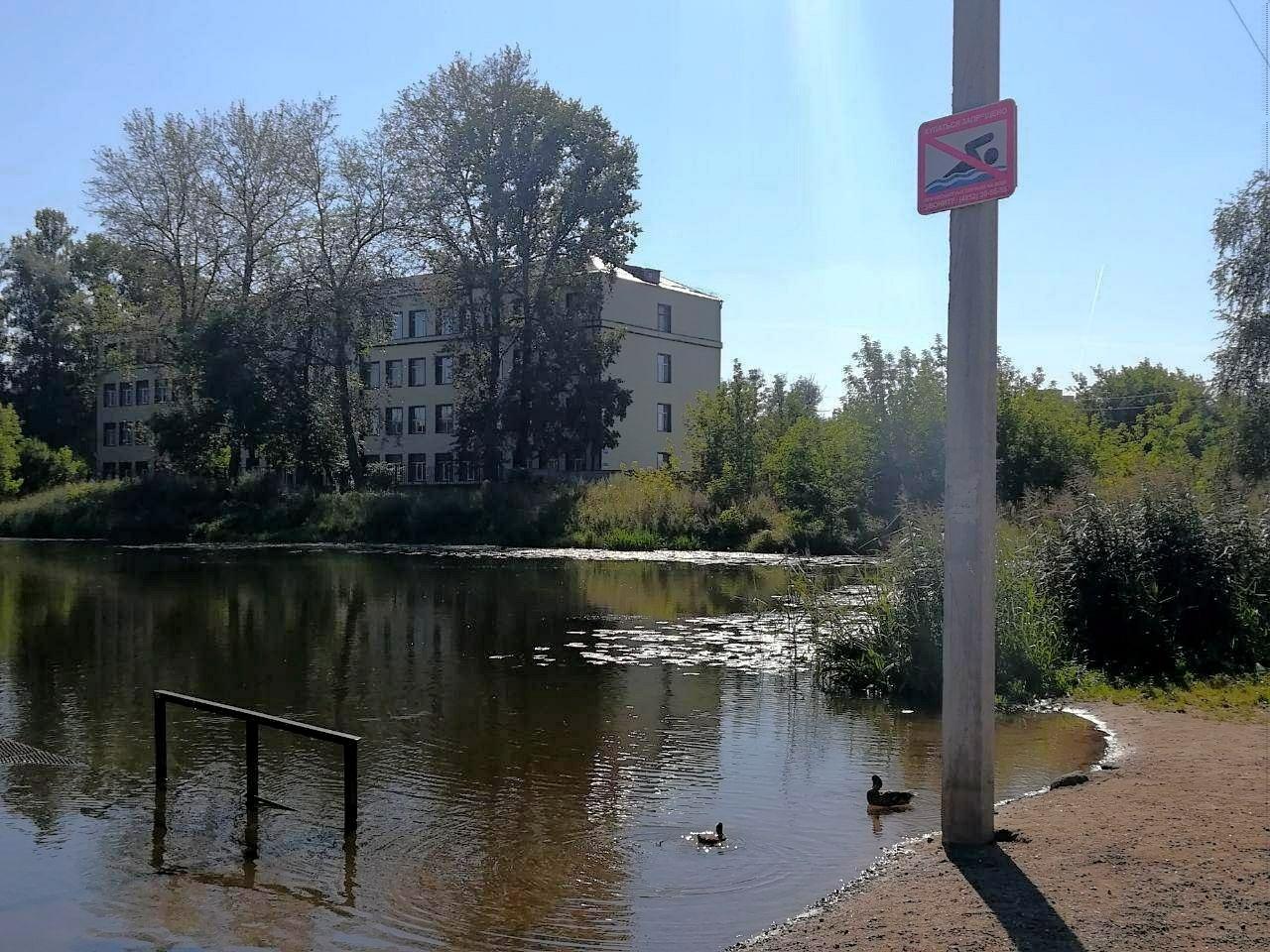 На Петропавловских прудах в Ярославле запретили купаться