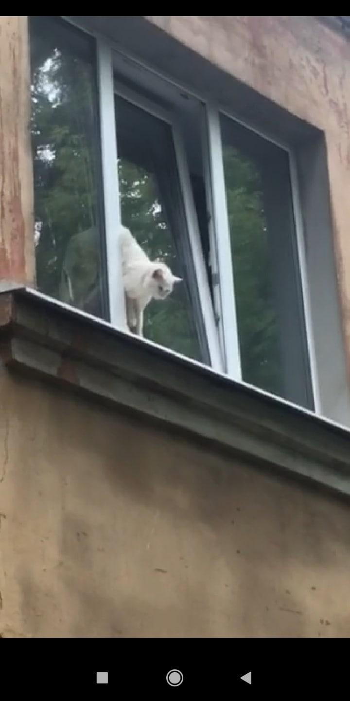 В Ярославле сотрудники ЦГЗ спасли от гибели застрявшего в окне кота