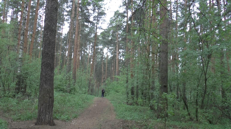 В Ярославской области осудят браконьера из Подмосковья за убийство лося