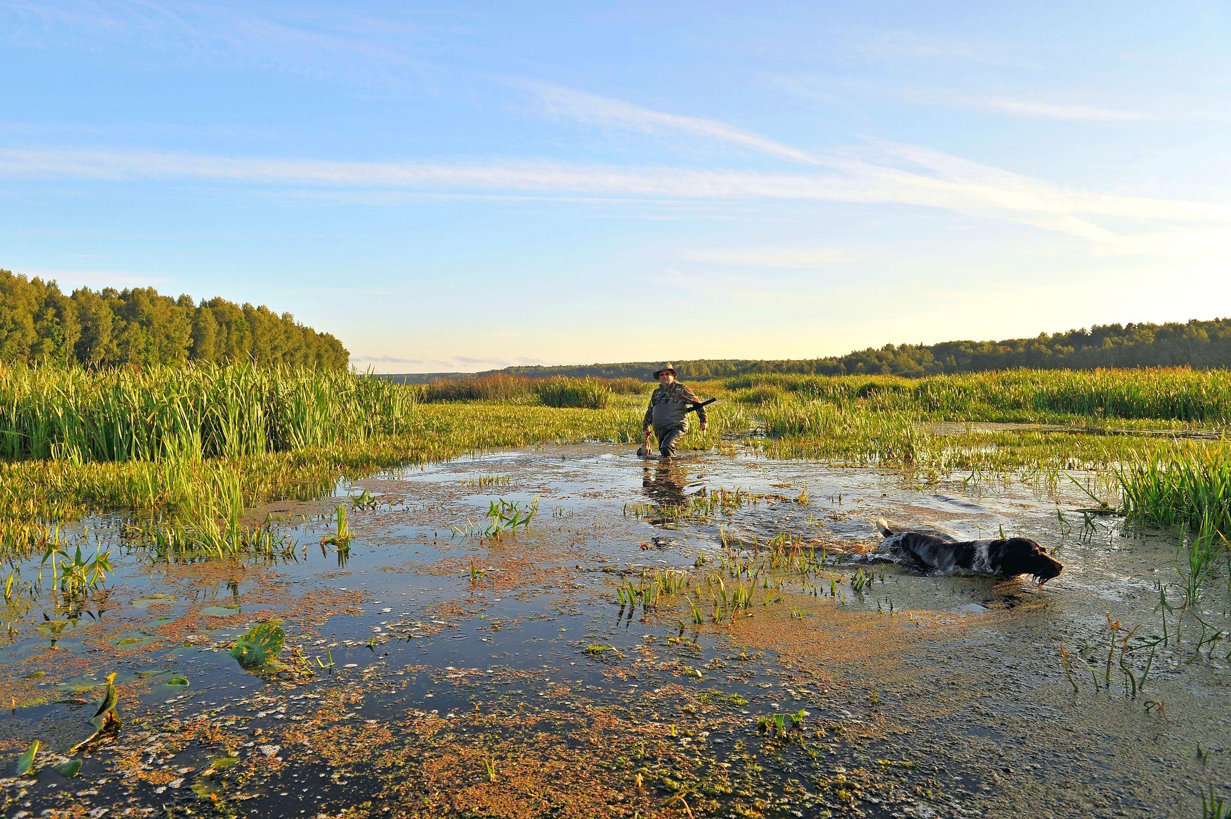В Ярославской области открывается сезон охоты на болотно-луговую дичь