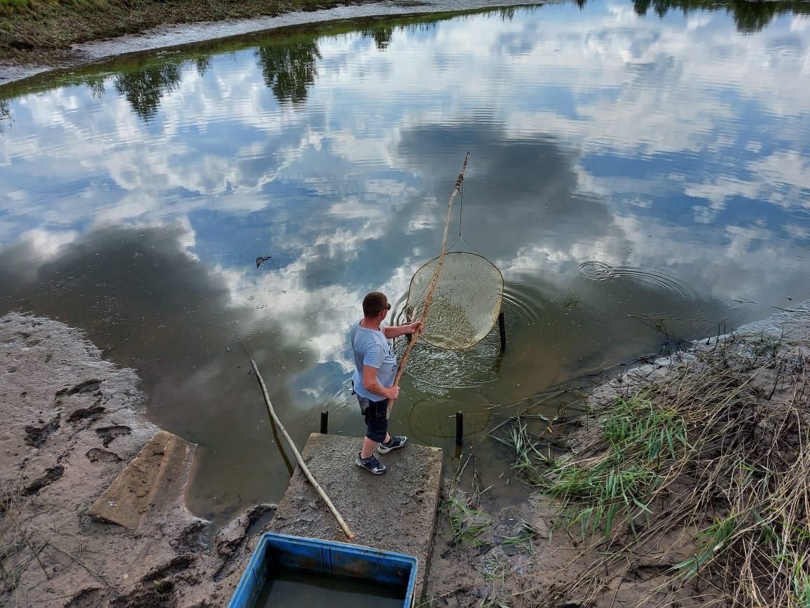 Более 40 тысяч мальков сазана выпустили в Волгу в Некрасовском районе