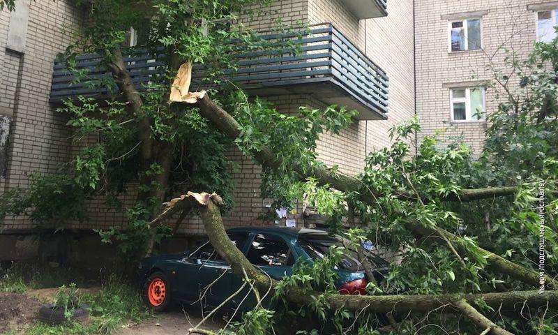 Во время грозы в Ярославле девочку придавило деревом