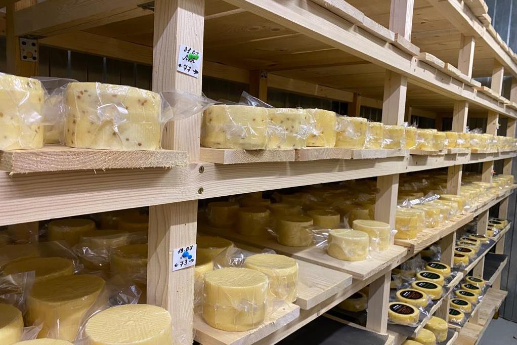 Сыровары из 10 регионов страны представят свою продукцию на ярмарке в Ростове