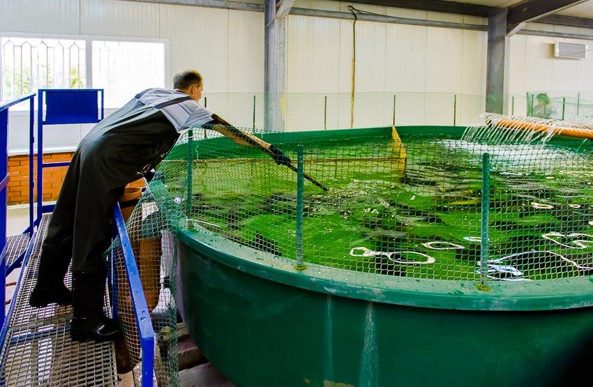 В водоемы Ярославской области выпустили миллионы мальков