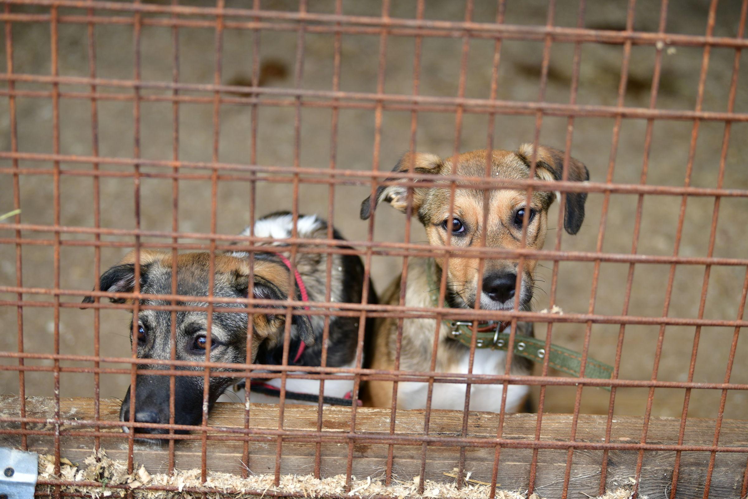 В Ярославском приюте для собак пройдет День открытых дверей