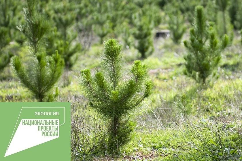 Осенью в Ярославской области работы по лесовосстановлению проведут на площади 150 гектаров