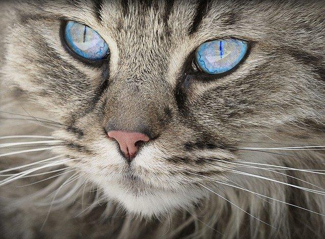 Ученые опровергли легенду о завезенных в Ленинград в годы войны эшелонах кошек