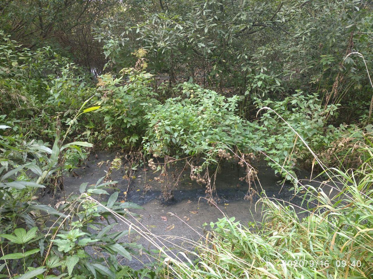 После сообщения в соцсетях власти инициировали расследование об утечке канализационных стоков в Константиновском